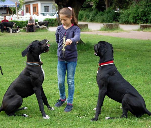 Die Doggentreffen und Doggenreisen der Deutschen Doggen vom Gehrensee